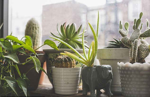 Indoor Air Quality Cannot Be Improved Using Plants, Research Says
