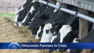 Wisconsin sheds 10% of the dairy farmers in 2019